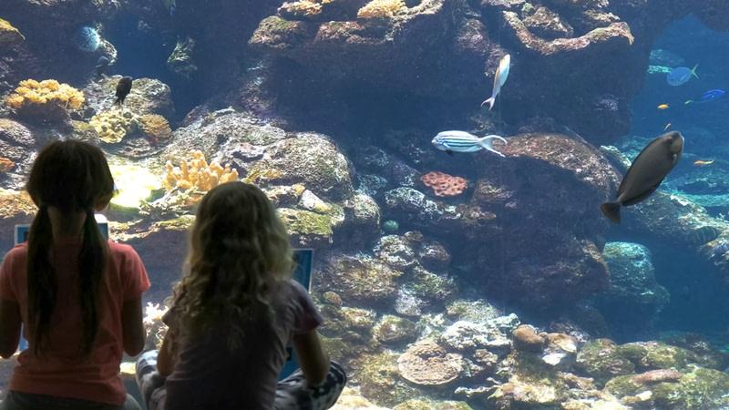 Go to an Aquarium