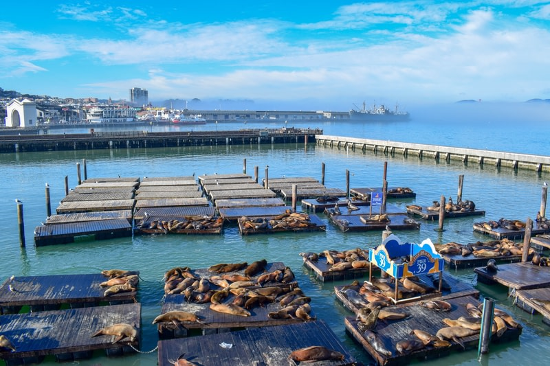 Visit San Fran & the Bay Area