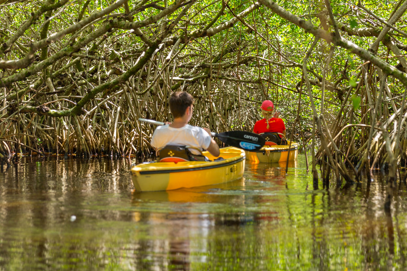 Don't get lost in the Everglades