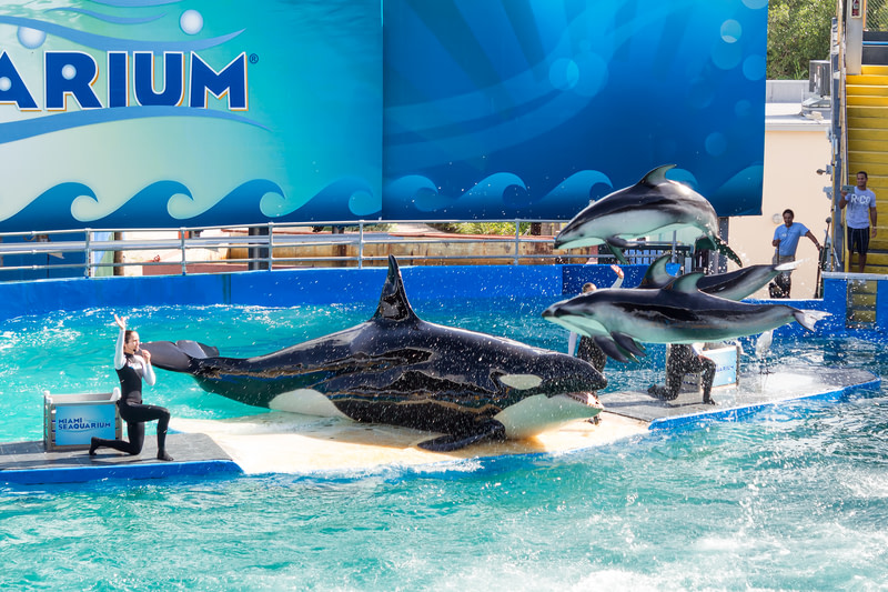 Enjoy watching the whales in Miami Seaquarium