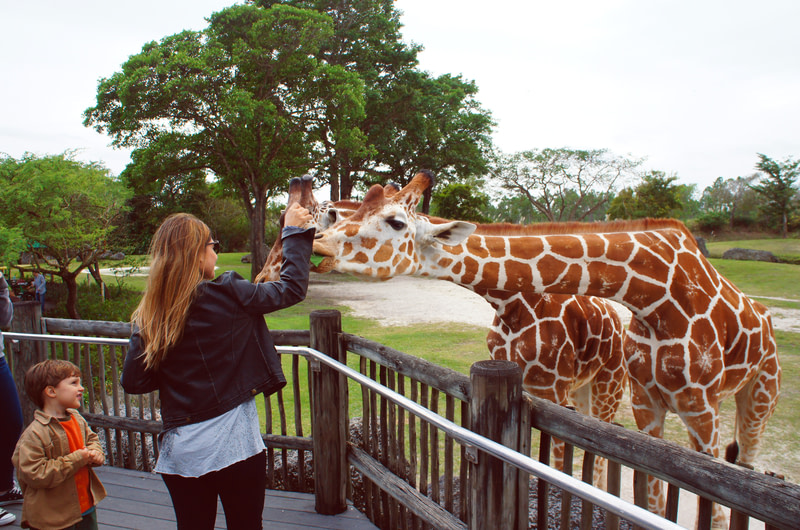 Get up close and personal with the Wildlife