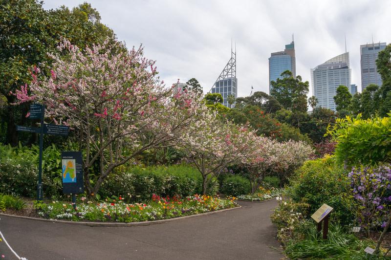 Visit Sydney Royal Botanic Garden